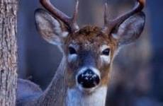 DeerbyTree