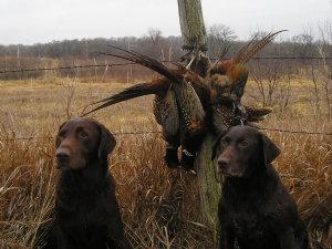 huntingdogs