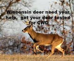 deer-cwd