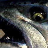 len-harris-fish-face