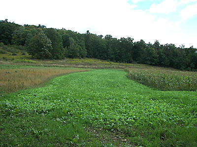 Planning Your Food Plot / Salmon fishing in Sturgeon Bay ...